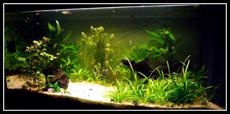Mon petit coin de nature  Dscf7510