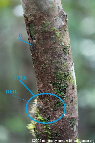 Photos de branches... - Page 2 Madaga10