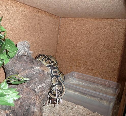 Marques et fabricants de terrarium : vos avis Python12