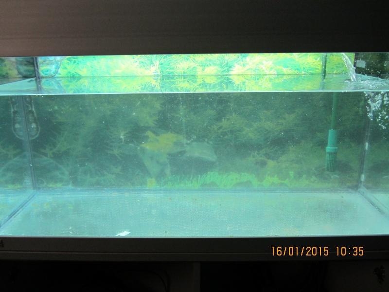 Aquarium 180l Eheim  Img_1420