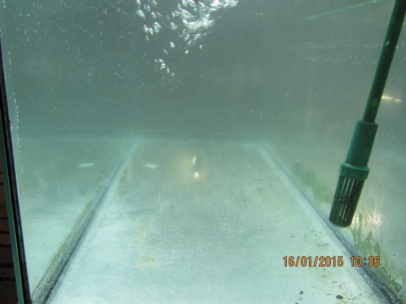 Aquarium 180l Eheim  Img_1421