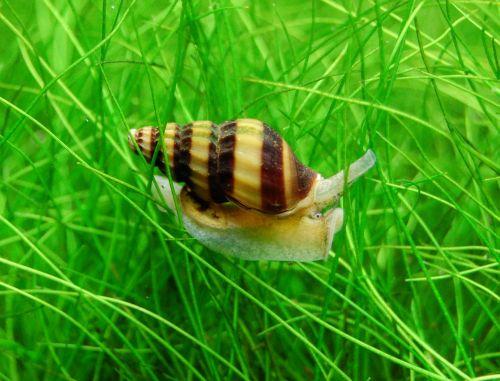 Invasion de petits escargot Anento10