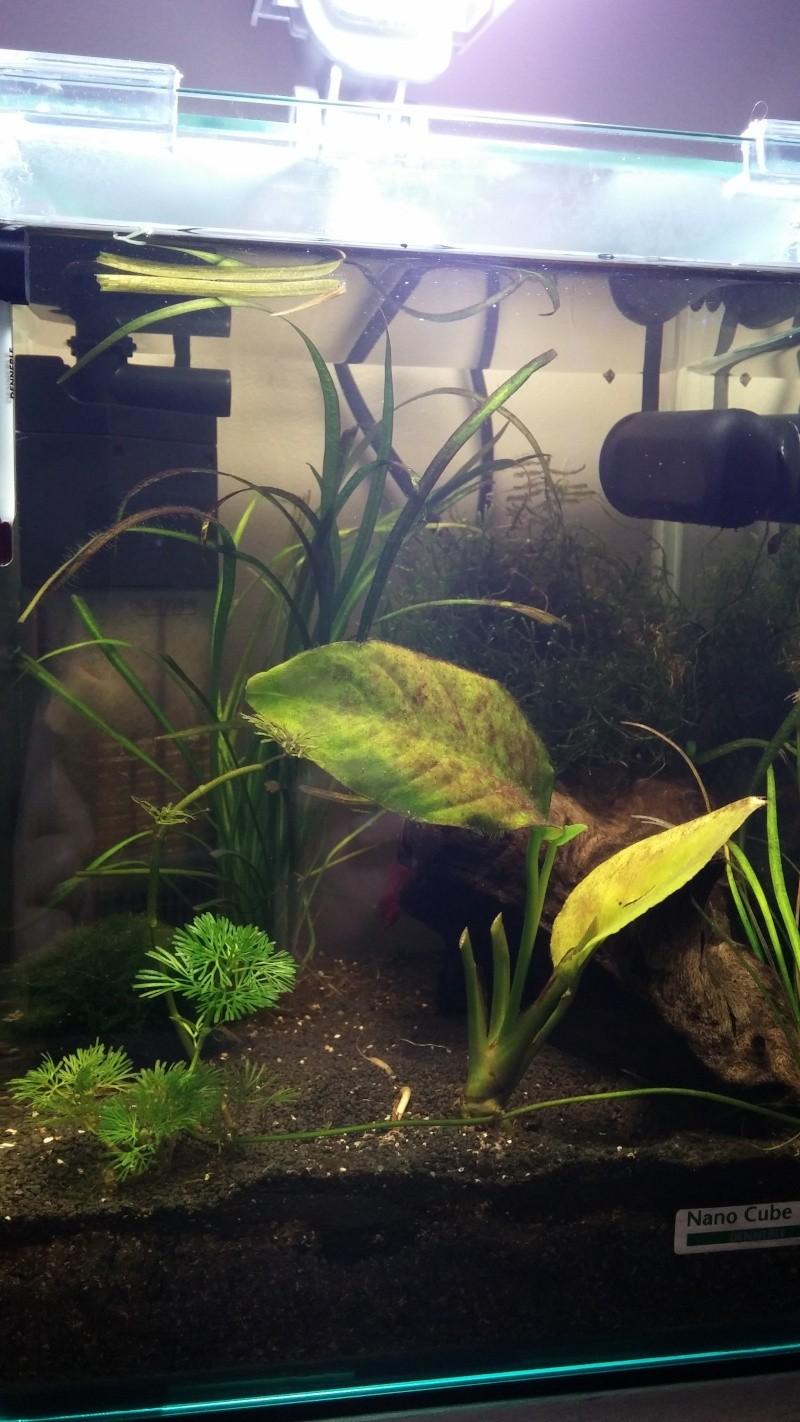 Problèmes de plantes et sol 20150211