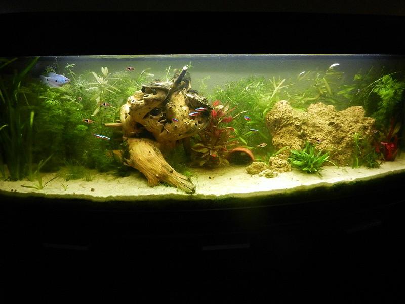 Mon aquarium de A à Z... C'est fini :( - Page 7 Dscn3410