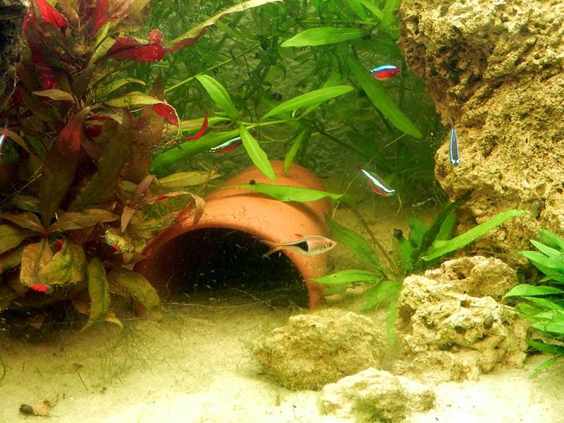 Mon aquarium de A à Z... C'est fini :( - Page 7 Dscn3412