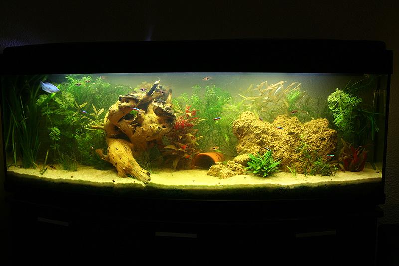 Mon aquarium de A à Z... C'est fini :( - Page 6 Img_8610