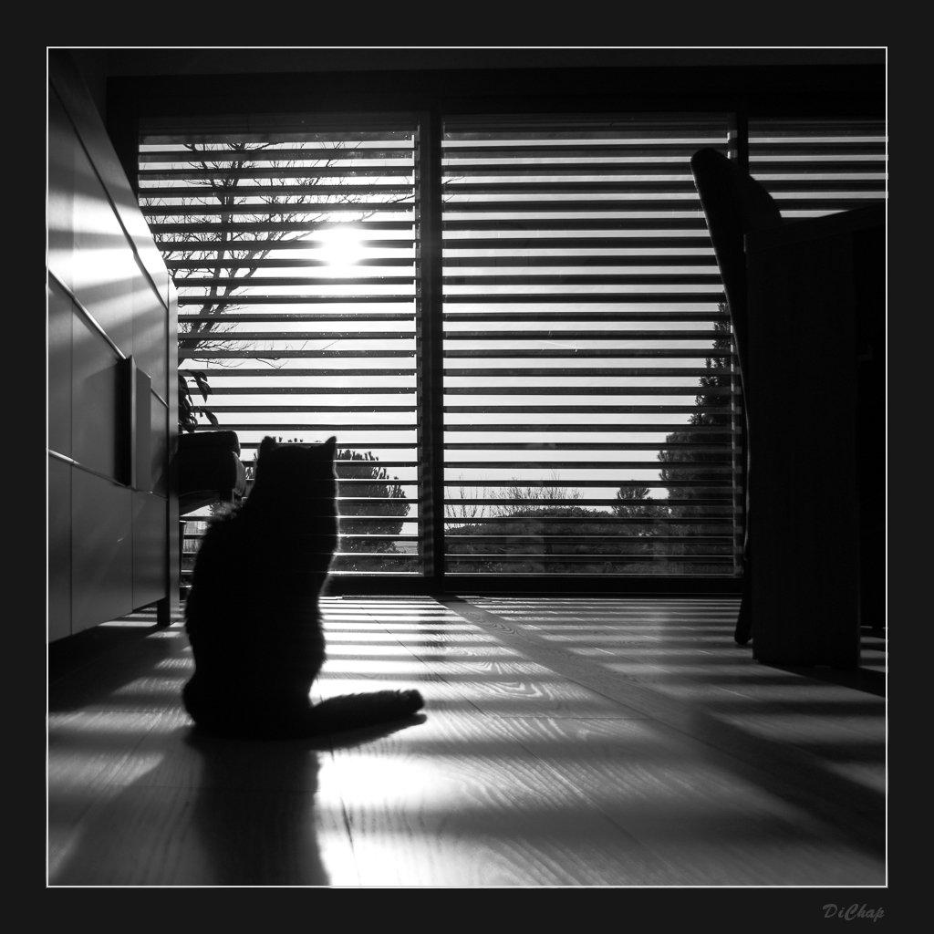 Soleil+Brise-Soleil=Photo P1040010