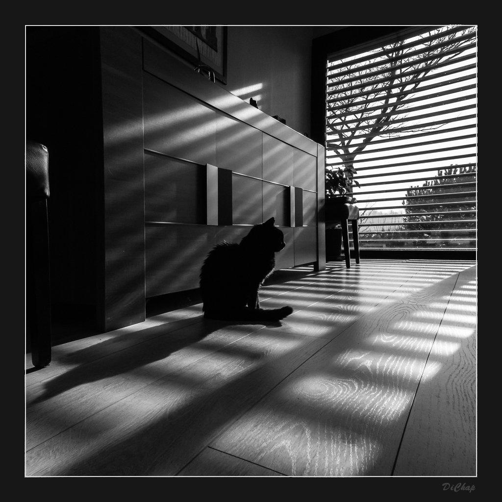 Soleil+Brise-Soleil=Photo P1040013