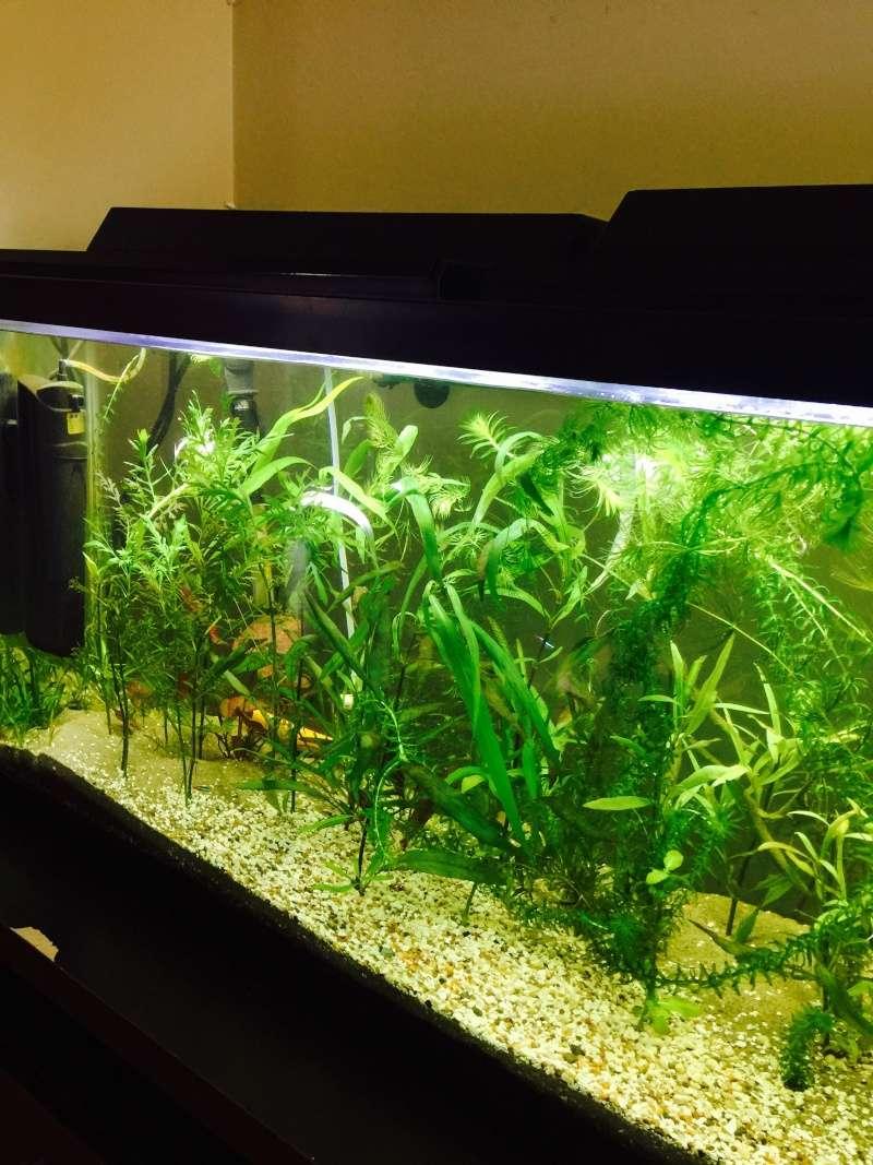 Mes (plus) de 60 plantes dans mon 240 litres - Page 7 Image46