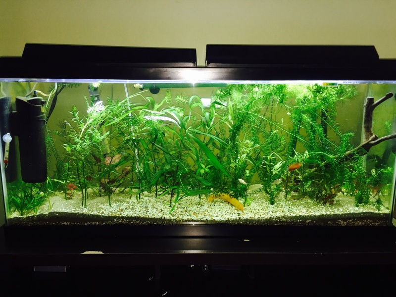 Mes (plus) de 60 plantes dans mon 240 litres - Page 7 Image47
