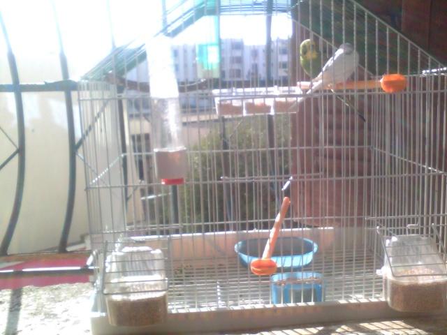 mes belles perruches  Img_2010