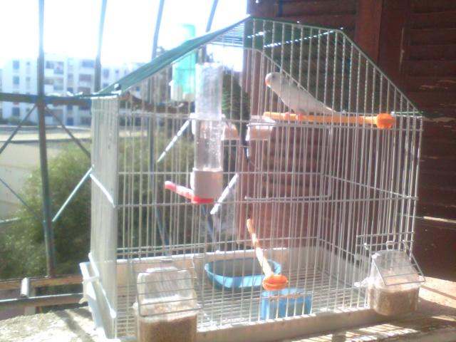mes belles perruches  Img_2011