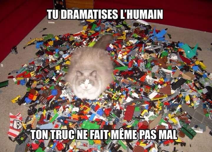 Images du jour sur les chats - Page 6 Img_3210