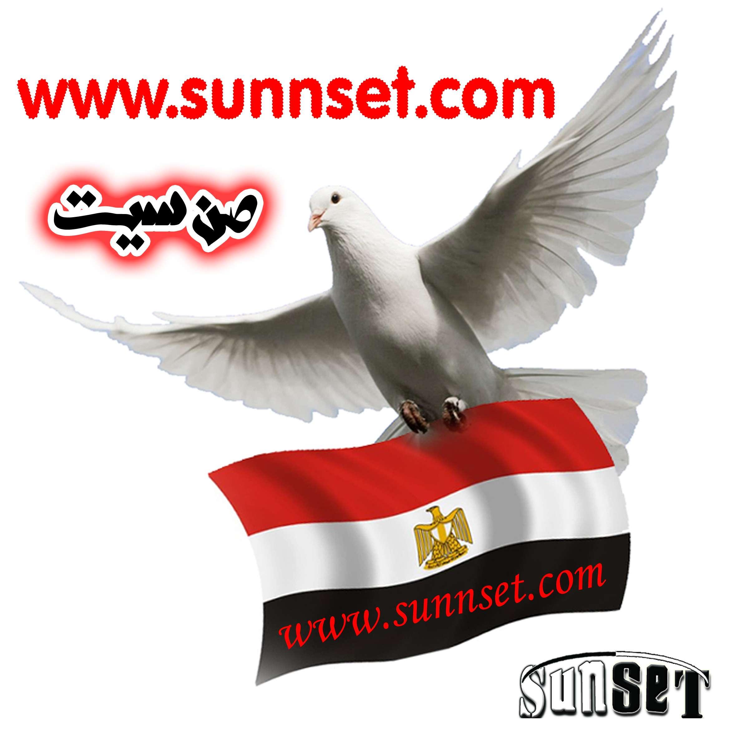حمامة تحمل علم مصر من تصميمي Oo_oo_10