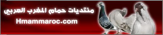 منتديات ومواقع مصر والعالم لتجارة الحمام 01069443076 Captur16