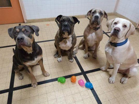 Nos petites et grandes victoires avec nos chiens - Page 39 Etholo10