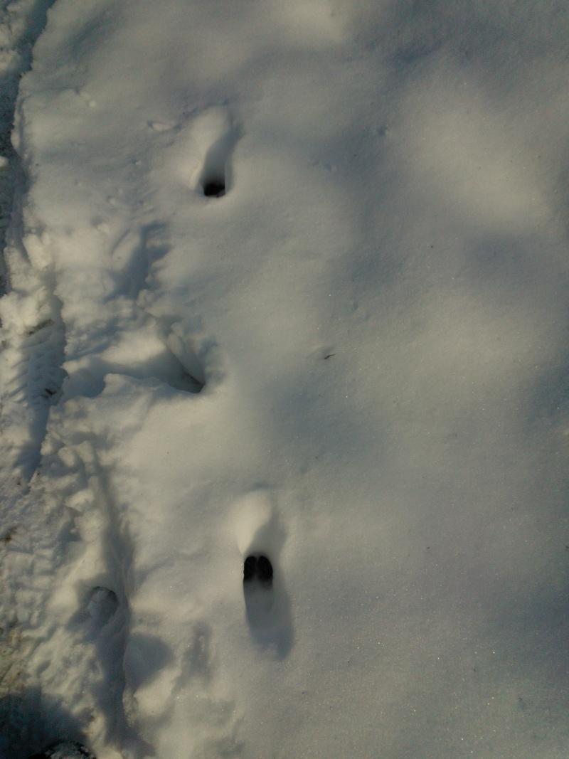 Photos d'indices et traces d'animaux. Wp_00013