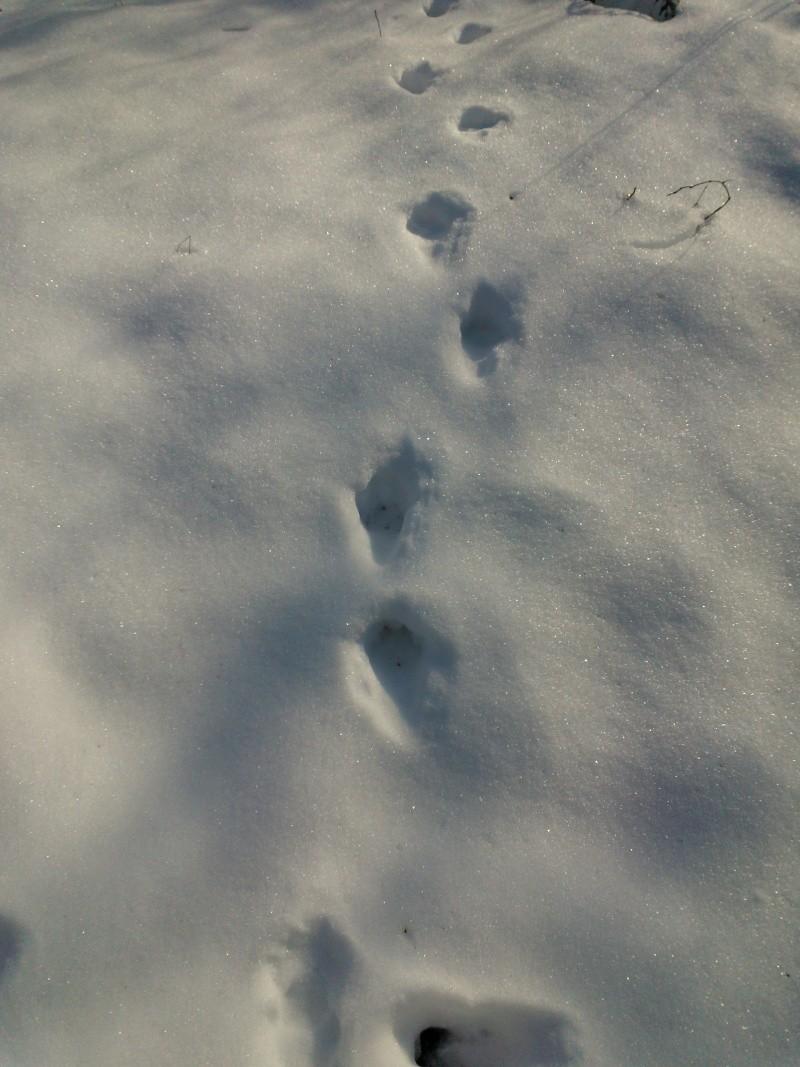 Photos d'indices et traces d'animaux. Wp_00014