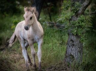 Jeux des petits chevaux de Mme Vanity Fair.  White-13