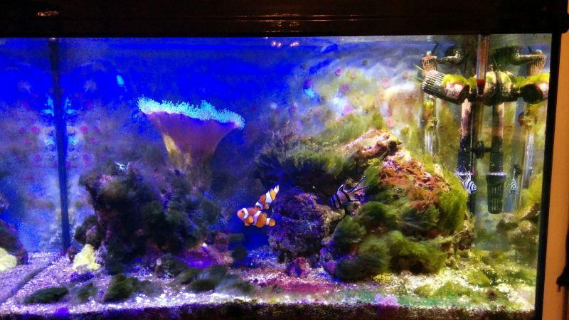 Premier aquarium récifal bis - Page 5 Bac11
