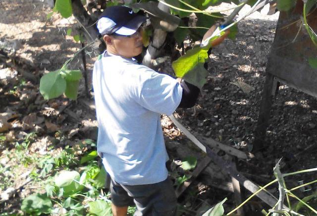 Gotong-royong membersihkan kawasan KRT Tmn Tropicana -28feb2015 Photo_50