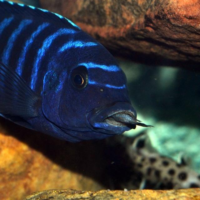 Mon autre passion, l'aquariophilie. Dsc_0015