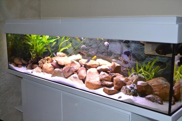 Mon autre passion, l'aquariophilie. Dsc_0910