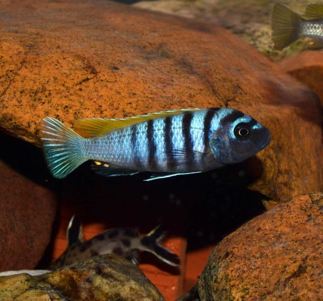 Mon autre passion, l'aquariophilie. Dsc_0911