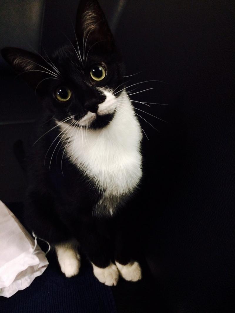 JEFFERSON, chaton mâle noir et blanc, né le 20/08/14 Image310