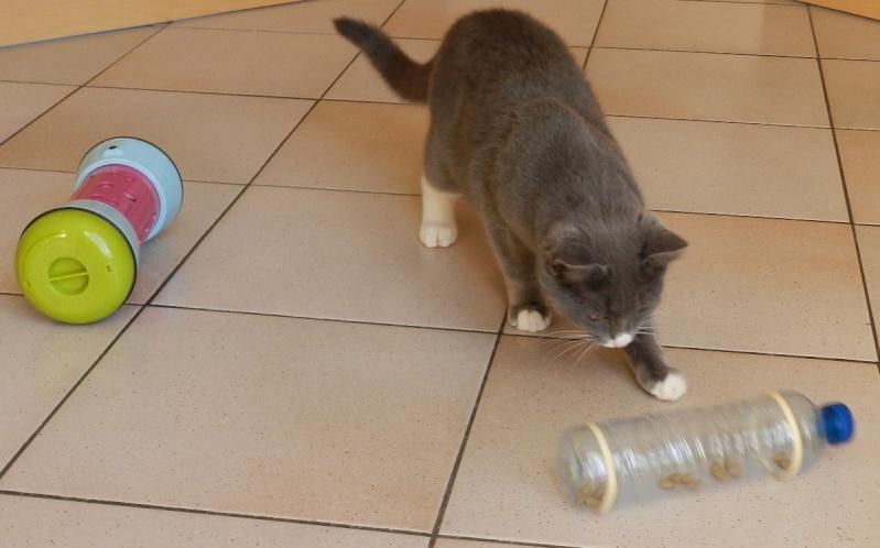Mes deux chats sont voraces !! Dscn0110