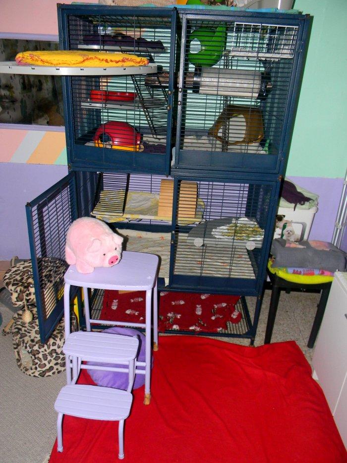Photos de vos cages - Page 3 30745911