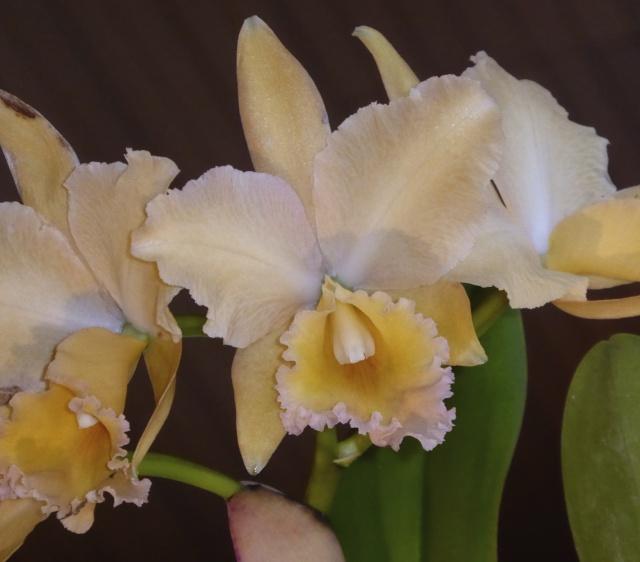 Münchner Orchideenausstellung! P1010713