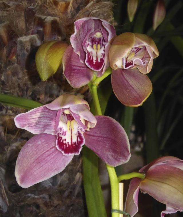 Münchner Orchideenausstellung! P1010720