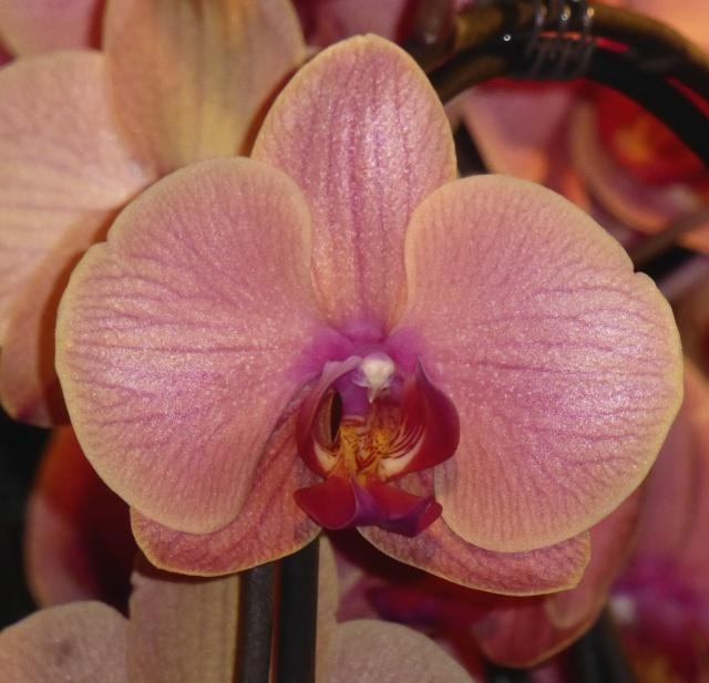 Münchner Orchideenausstellung! P1010726
