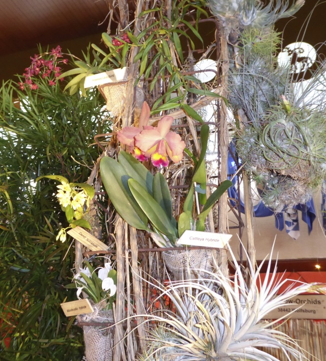 Münchner Orchideenausstellung! P1010727