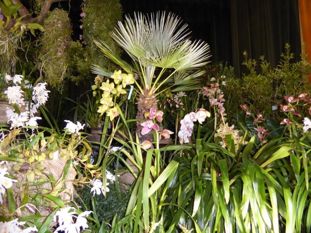 Münchner Orchideenausstellung! P1010728