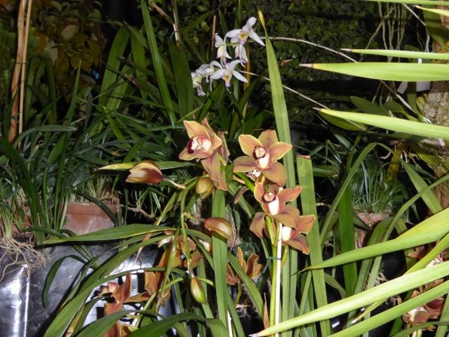 Münchner Orchideenausstellung! P1010730