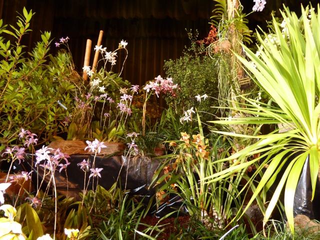 Münchner Orchideenausstellung! P1010732