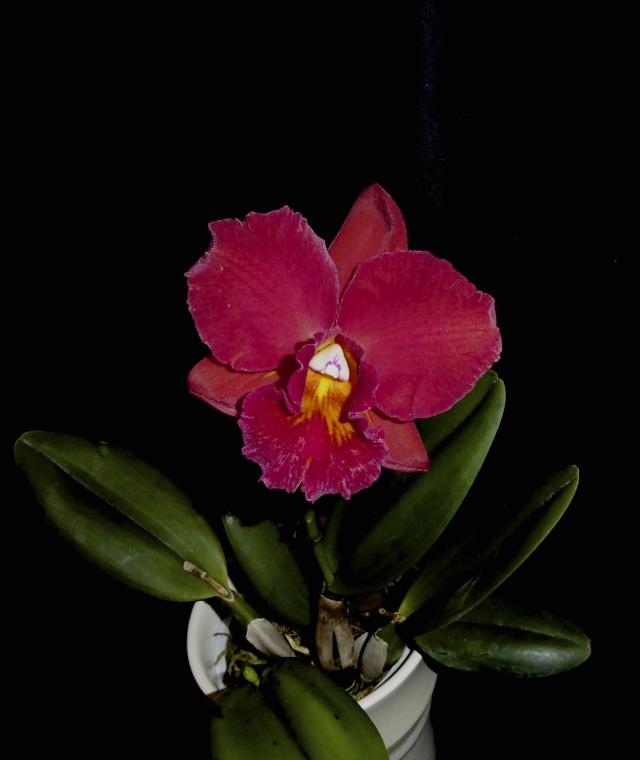 Münchner Orchideenausstellung! - Seite 2 P1010733