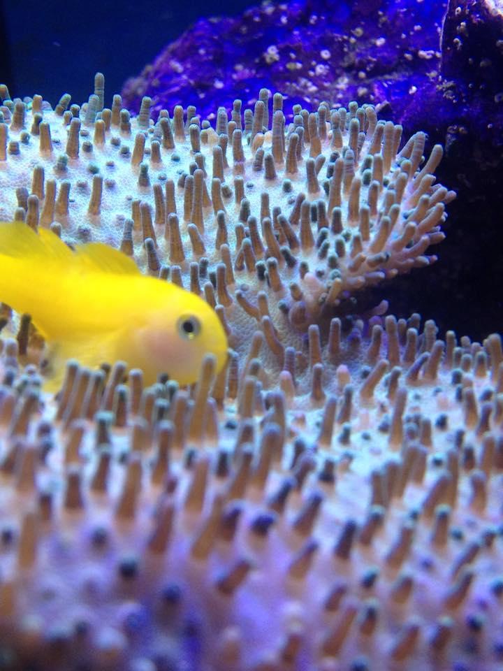 Quel est votre poisson préféré?? - Page 2 10947611