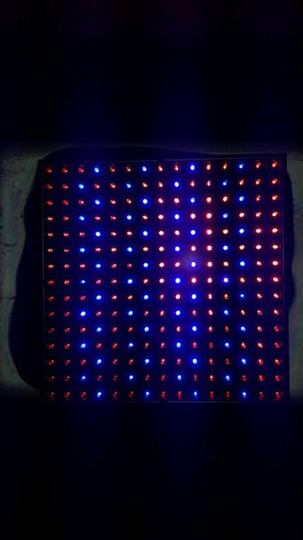 Mein neues Projekt ! :) Aussaat mit ausschließlich künstlicher wärme und Licht :) Bild710