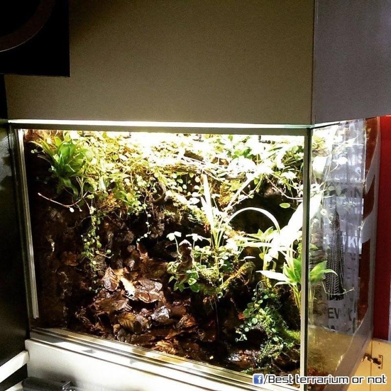 Les plus beaux terra/viva/aqua rium  A10