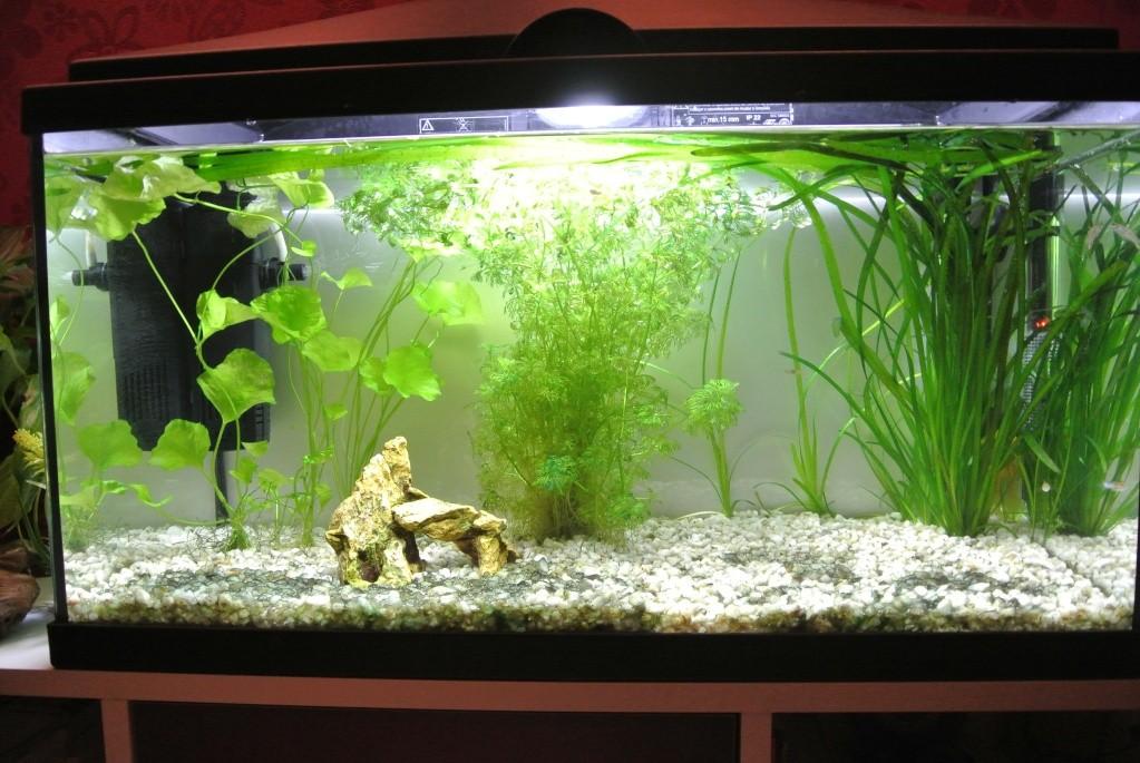 algues vertes à bulles... - Page 3 Dsc_5010