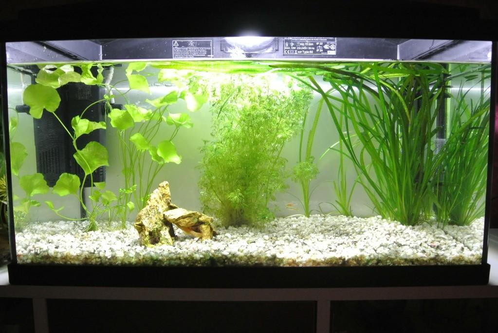 algues vertes à bulles... - Page 3 Dsc_5012