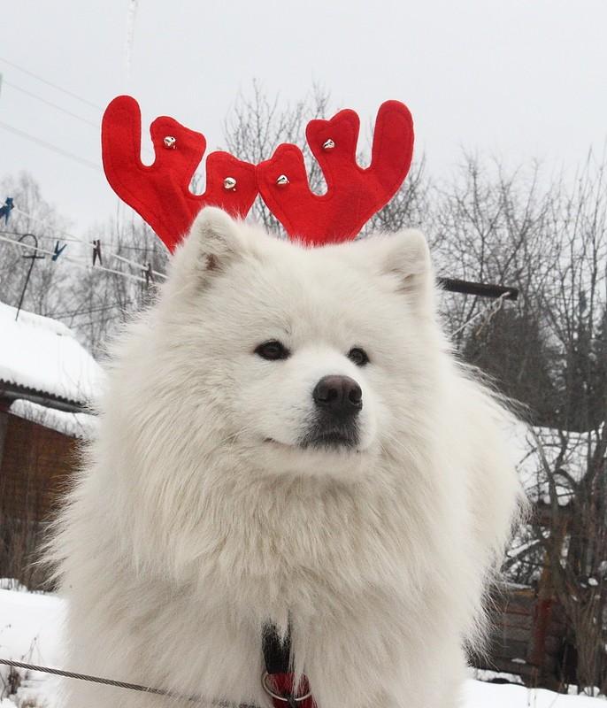 Новый Год и Рождество 2015. Карпаты. Микуличин. 14615616