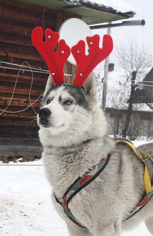 Новый Год и Рождество 2015. Карпаты. Микуличин. 14615617