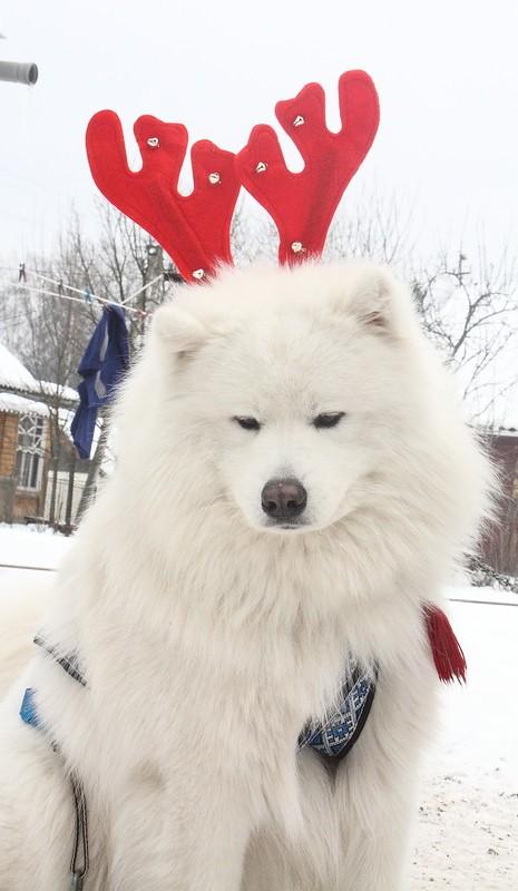 Новый Год и Рождество 2015. Карпаты. Микуличин. 14615620