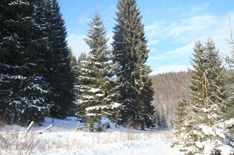Новый Год и Рождество 2015. Карпаты. Микуличин. 14615711