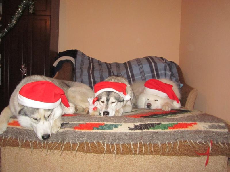 Новый Год и Рождество 2015. Карпаты. Микуличин. Img_6515