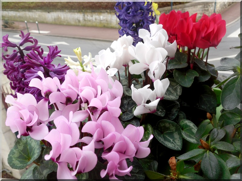 instant fleurit  Sdc11010